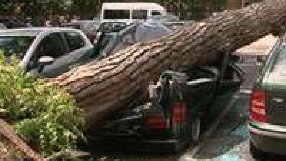 Riccione, enorme pino distrugge quattro auto