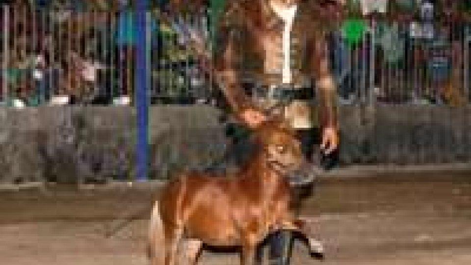 Città di Castello: ritrovato Charlie, il pony più piccolo del mondo