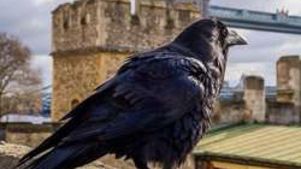 27 febbraio 2006: dopo mille anni i corvi della Torre di Londra vengono chiusi in gabbia per paura dell'aviaria