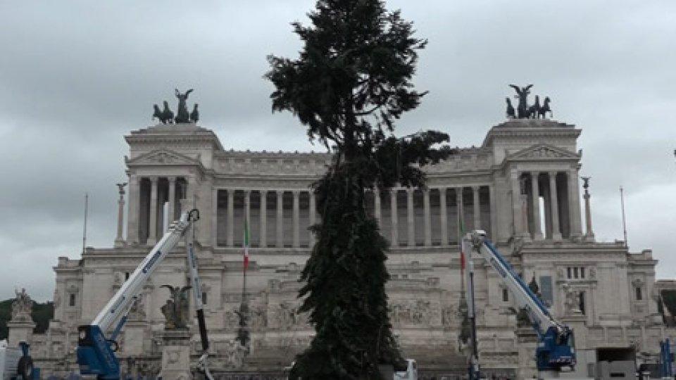 L'albero in piazza VeneziaDa Spelacchio a Spezzacchio, l'albero di Natale di Roma fa di nuovo discutere