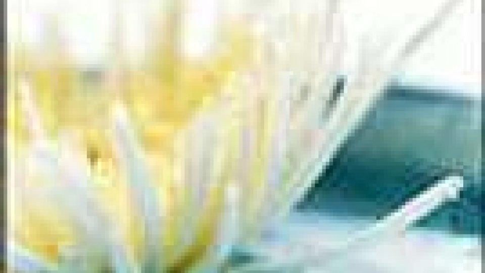 Caro-fiori: un +10% dal 2003