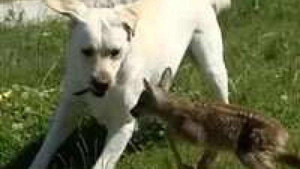 San Marino - Cani avvelenati. Darma ce la farà