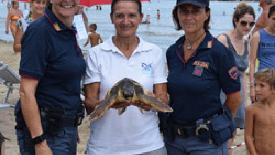 La liberazione della tartaruga
