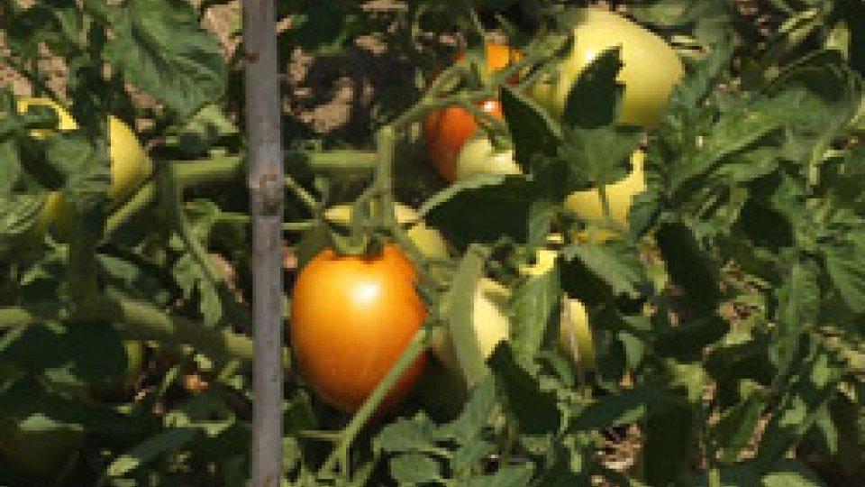 Analisi della ColdirettiIl clima pazzo fa crollare i raccolti degli alimenti Made in Italy