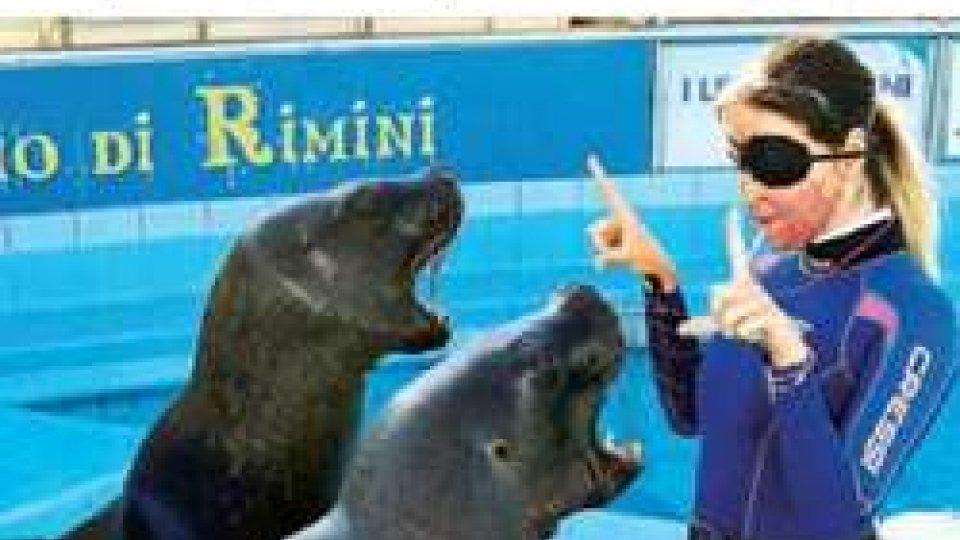 Gessica Notaro: la solidarietà del Sindaco di Rimini Andrea Gnassi e dell'Amministrazione comunale
