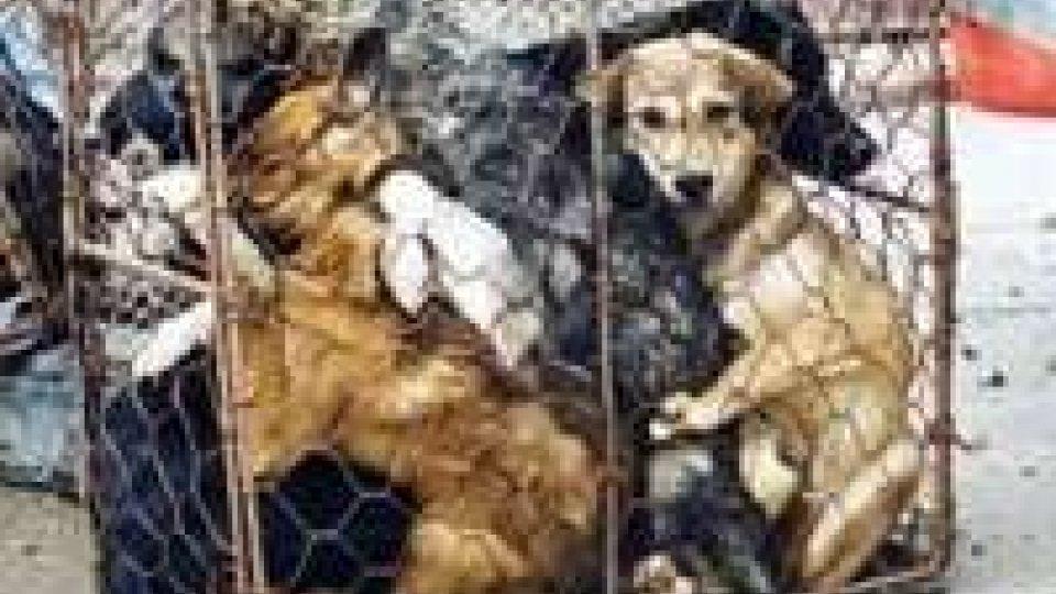 Sgominato traffico di cani e gatti dall'Est Europa