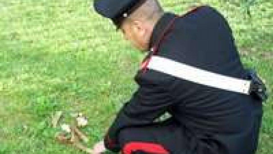 Scoperti probabili resti umani in un bosco del Riminese
