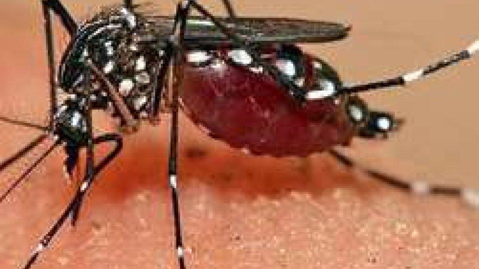 Zanzara tigre: è già tempo di prevenzioneZanzara tigre: è già tempo di prevenzione