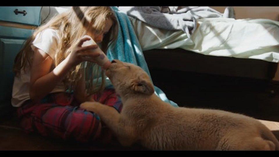 MIA E IL LEONE BIANCOIl colore dell'amore: San Marino Cinema presenta storie di uomini e animali in Sudafrica