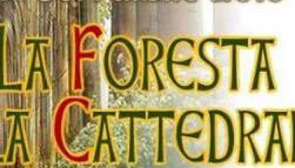 La foresta e la cattedrale