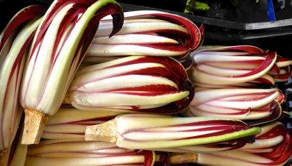 Fagottini di radicchio rosso caramellato con ricotta dolce, noci e cannella