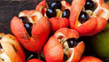 Frutti alieni, quando la Natura si sbizzarrisce