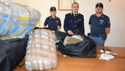 A Gabicce Monte trovato un deposito con mezza tonnellata di marijuana