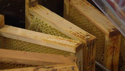 Miele, apicoltori di San Marino: mai così male