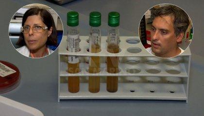 Ospedale di San Marino, promuovere lo screening della popolazione contro un parassita intestinale tropicale
