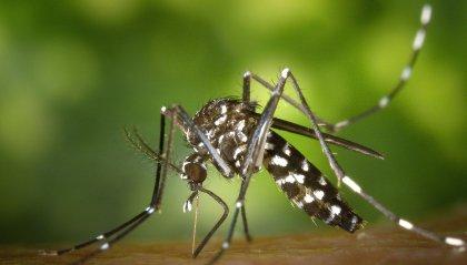 World Mosquito Day: dagli esperti le regole per difendersi dalle zanzare