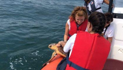 """Campagna avvistamenti mammiferi marini: """"Cetacei, FAI attenzione""""."""