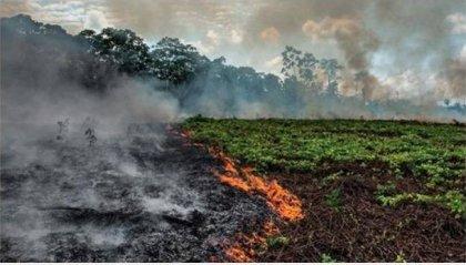 G7, sul tavolo anche gli incendi in Amazzonia