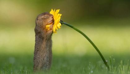 Lo scoiattolo che annusa i fiori ad occhi chiusi