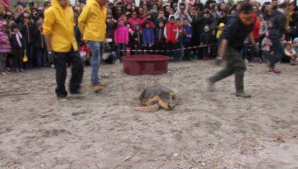 1500 tartarughe marine salvate dal progetto TartaLife