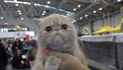 Super Cats Show 2019, a Roma in mostra i gatti più belli