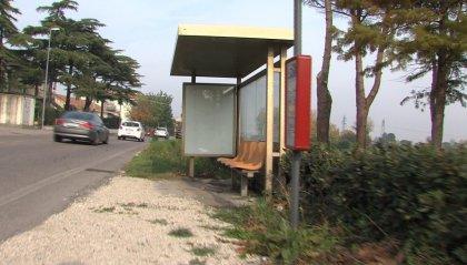 Lupo impiccato nel Riminese, patteggiano i tre imputati