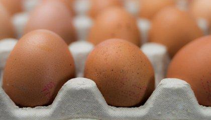 Contaminazione microbiologica: ritirati dal mercato lotti di uova a rischio