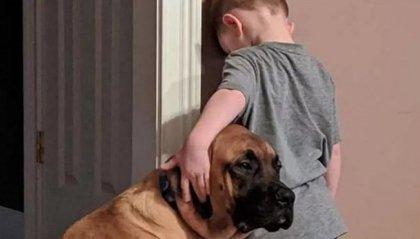 Un cane si va a mettere in punizione insieme al bambino per tenergli compagnia