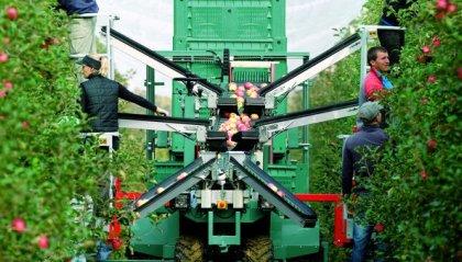 Agricoltura in Emilia Romagna: la mancanza manodopera preoccupa in vista dell'estate