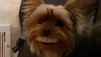 Il cane che ruba la dentiera al padrone