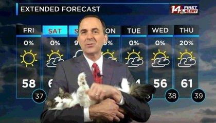 Previsioni meteo... con gatto