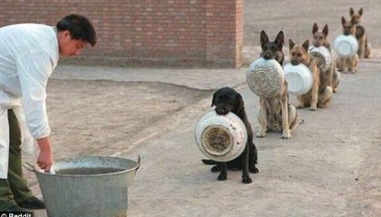 Cani che fanno la fila per mangiare