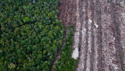 Allarme deforestazione post-Covid: i governi allenteranno i controlli in favore dell'economia