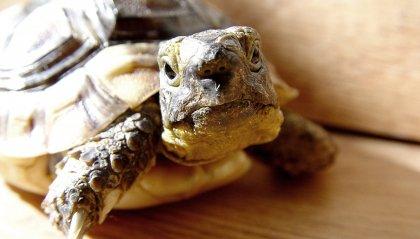 Non solo amici a 4 zampe: tartaruga abbandonata in autostrada, salvata dalla Polizia Stradale