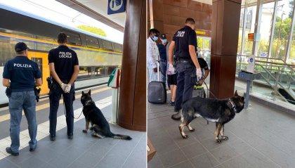 Riccione: il cane Ziko fiuta l''erba' in stazione