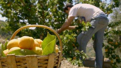 Anno nero per la frutta in Romagna: crollo produttivo di oltre 80%