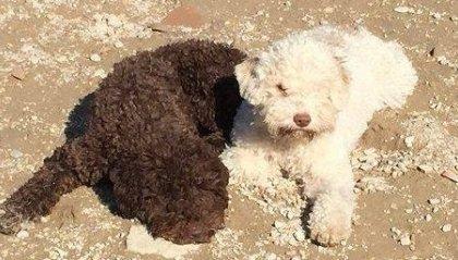 26 Agosto 2020 - Giornata Mondiale del cane