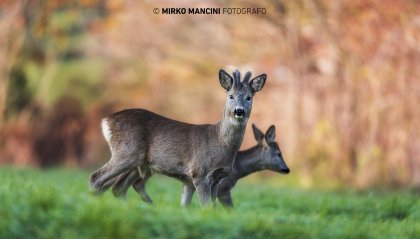San Marino Green Festival: la mostra di Mirko Mancini
