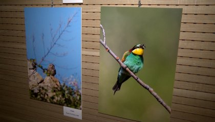 Compagni di viaggio: la mostra fotografica sulla quotidianità della fauna selvatica di San Marino