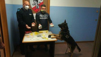 Rimini: il cane Jago fa scovare 30mila euro di droga in un'attività