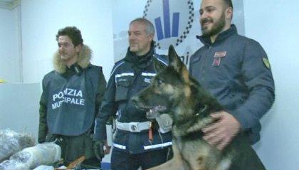 Rimini: arrestata guardia penitenziaria grazie al cane antidroga, aveva marijuana pronta per lo spaccio