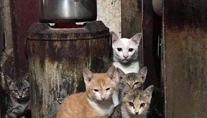 Foto con cinque  gatti...ma ce ne sono sei