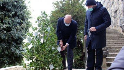 Segreteria Territorio: tante celebrazioni per la prima Giornata nazionale dell'albero