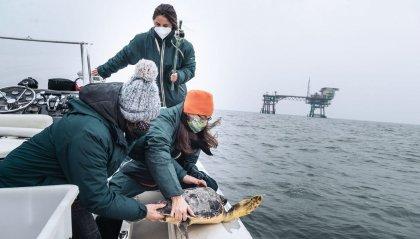 Fondazione Cetacea: riportate in mare due tartarughe marine, ma i recuperi continuano