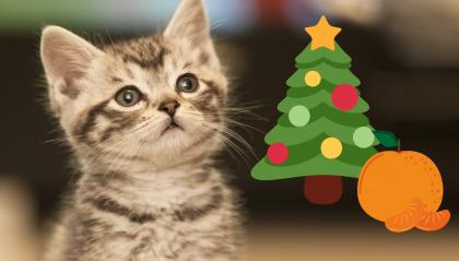 Il metodo per tenere il suo gatto lontano dall'albero di Natale