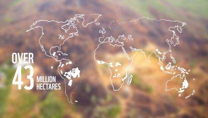 WWF: in 13 anni cancellati 43 milioni di ettari di foresta