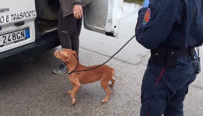 """Operazione """"Sweet puppies"""" a Rimini: arrestato 39enne per commercio illecito di animali"""
