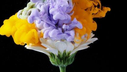 """""""Bucolic"""":  'esplodere' i fiori"""