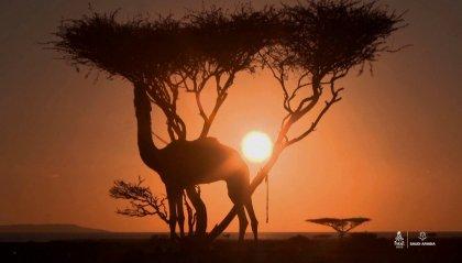 Presentata la Dakar 2022: sempre in Arabia ma con un percorso stravolto