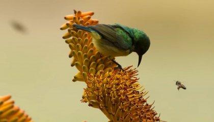"""La """"resilienza biologica"""" di Attenborough"""